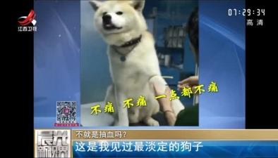 不就是抽血嗎? 這是我見過最淡定的狗子