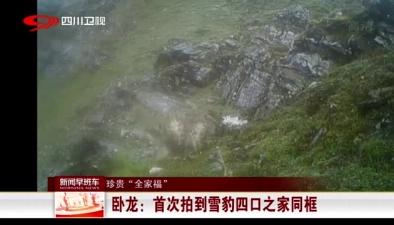 """珍貴""""全家福"""":臥龍首次拍到雪豹四口之家同框"""