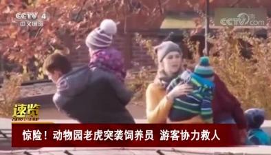 驚險!動物園老虎突襲飼養員 遊客協力救人