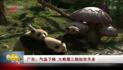 大熊貓三胞胎歡樂多