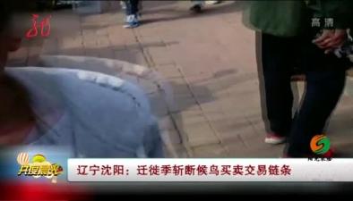 遼寧沈陽:遷徙季斬斷候鳥買賣交易鏈條