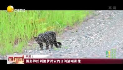罕見! 攝影師拍到婆羅洲雲豹日間清晰影像