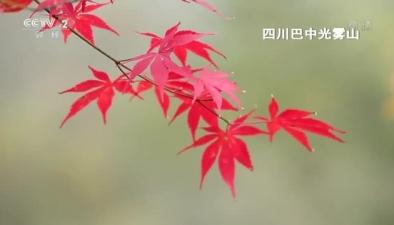 重慶 四川高山森林美景