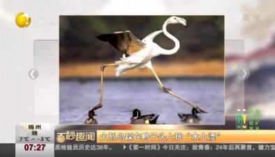 """火烈鳥踩在鴨子頭上玩""""水上漂"""""""