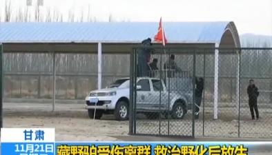 甘肅:藏野驢受傷離群 救治野化後放生
