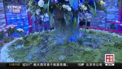 """福建漳州:神奇""""夜光花""""首次亮相"""