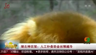 人工補食助金絲猴越冬
