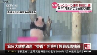 """旅日大熊貓幼崽""""香香""""將亮相 想參觀需抽簽"""