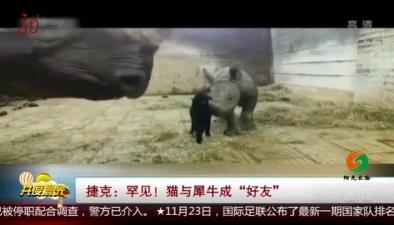 """捷克:罕見!貓與犀牛成""""好友"""""""