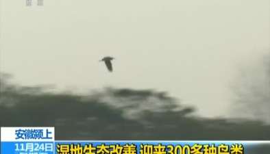 安徽潁上:濕地生態改善 迎來300多種鳥類
