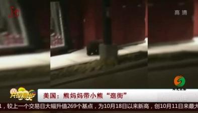 """美國:熊媽媽帶小熊""""逛街"""""""