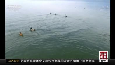 重慶漢豐湖濕地公園迎來越冬候鳥