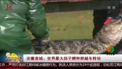 安徽宣城:世界最大揚子鱷種群越冬轉場