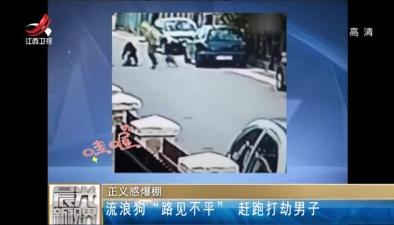 """正義感爆棚:流浪狗""""路見不平"""" 趕跑打劫男子"""