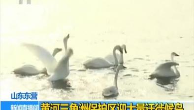 山東東營:黃河三角洲保護區迎大量遷徙候鳥
