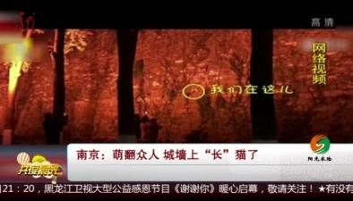 """南京:萌翻眾人 城墻上""""長""""貓了"""