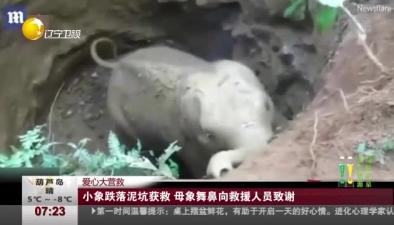 愛心大營救:小象跌落泥坑獲救 母象舞鼻向救援人員致謝