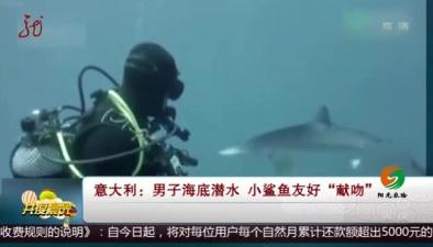 """意大利:男子海底潛水 小鯊魚友好""""獻吻"""""""