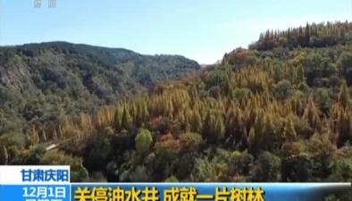 甘肅慶陽:關停油水井 成就一片樹林