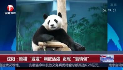 """熊貓""""發發""""調皮活潑 貢獻""""表情包"""""""
