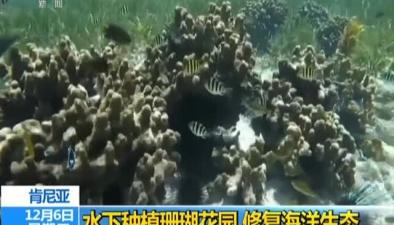 肯尼亞:水下種植珊瑚花園 修復海洋生態