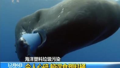 海洋塑料垃圾污染:令人心碎 鯨誤食塑料桶