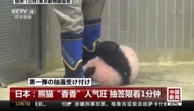"""日本:熊貓""""香香""""人氣旺 抽簽限看1分鐘"""