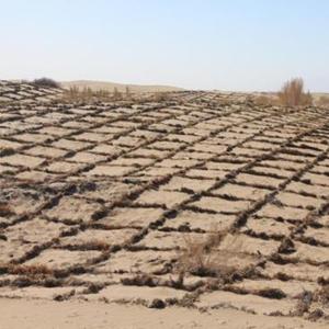 西媒盛讚中國非洲合作抗擊荒漠化