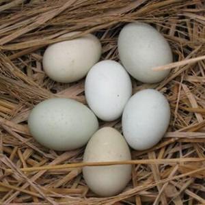 [經濟半小時]小雞蛋成就大産業