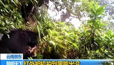 雲南景東:紅外相機拍到黑熊出沒