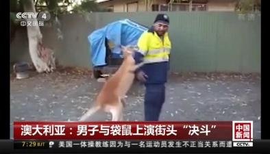 """澳大利亞:男子與袋鼠上演街頭""""決鬥"""""""