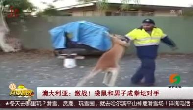澳大利亞:激戰!袋鼠和男子成拳壇對手