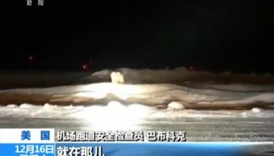 """美國:""""不速之客""""光臨 機場驚現北極熊"""