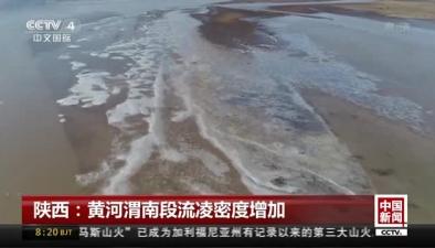 陜西:黃河渭南段流淩密度增加
