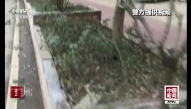 貴州凱裏:剎車失靈 小貨車撞上綠化帶