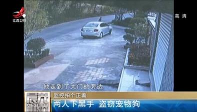 監控拍個正著:兩人下黑手 盜竊寵物狗