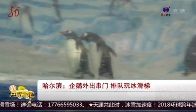 哈爾濱:企鵝外出串門 排隊玩冰滑梯