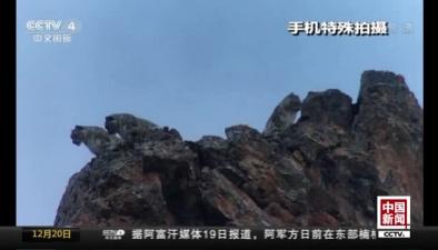 西藏丁青:拍攝到雪豹種群野外活動影像