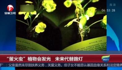 """""""螢火蟲""""植物會發光 未來代替路燈"""