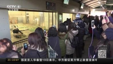 """日本:大熊貓寶寶""""香香""""首次與遊客見面"""