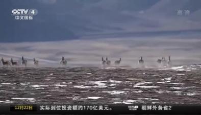 甘肅酒泉:野生動物活動場面蔚為壯觀