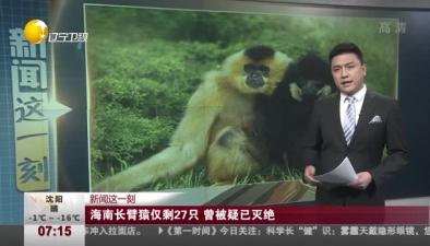 海南長臂猿僅剩27只 曾被疑已滅絕