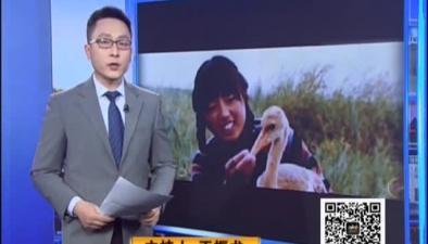 網絡直播蒼鷹表演 寧夏三漢被捕