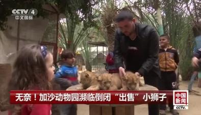 """無奈!加沙動物園瀕臨倒閉""""出售""""小獅子"""