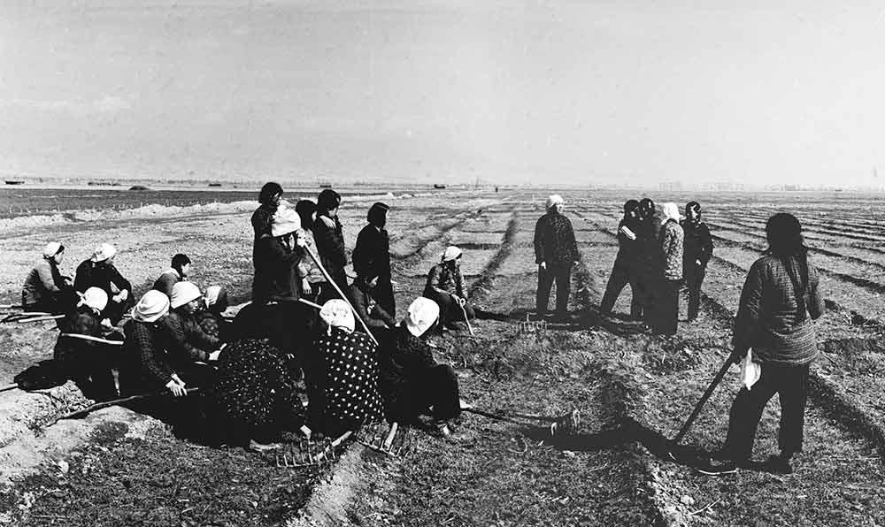 趙玉芳(中間站立者)領導的劉胡蘭突擊隊,1959年培育了三畝麥田。這是她們在田間休息的時候唱歌。
