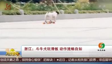 浙江:鬥牛犬玩滑板 動作流暢自如