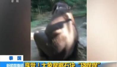"""泰國:享受!大象摩擦石塊""""撓癢癢"""""""