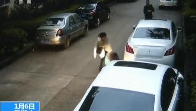 重慶開州:野豬進城區 誤闖超市衝撞行人