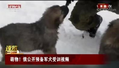 萌物!俄公開預備軍犬受訓視頻