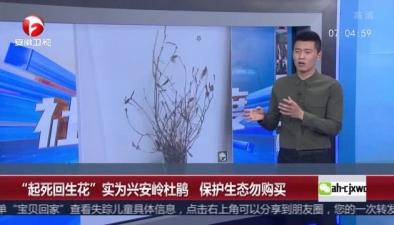 """""""起死回生花""""實為興安嶺杜鵑 保護生態勿購買"""